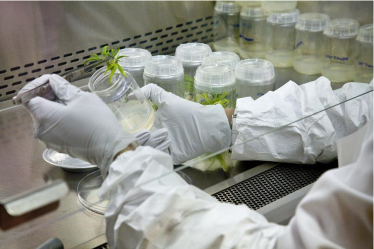 Canna Lab Pic Facing Left.png