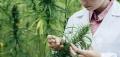 Cannabis testing QA facing left.jpg
