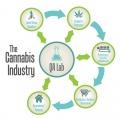 Canna Industry.jpg