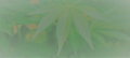 Cannabis banner.png